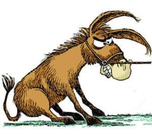 Stubborn mule