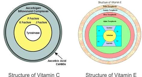 The Vitamin E and Vitamin C cell structure