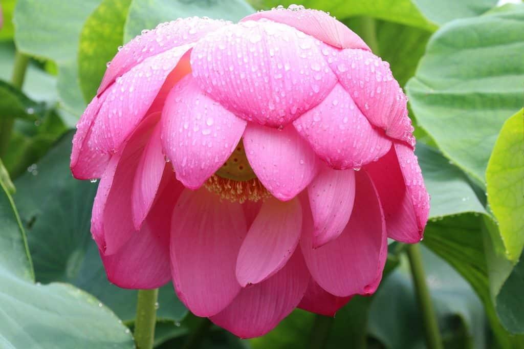 PMS-Flower in the rain