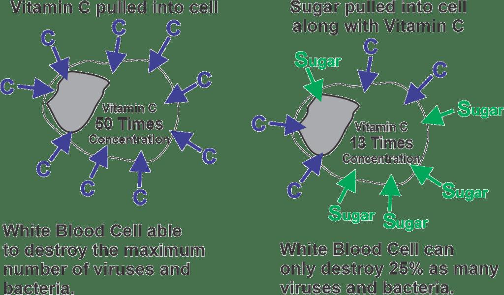 Sugar & Immune System-fig2